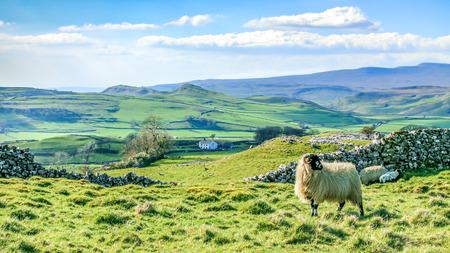 dales: Beautiful yorkshire dales landscape stunning scenery england tourism uk green rolling hills sheep