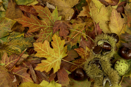 Colorful and bright background with fallen autumn leaves and chestnuts Zdjęcie Seryjne