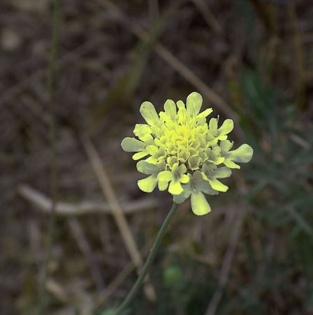 Little yellow flower