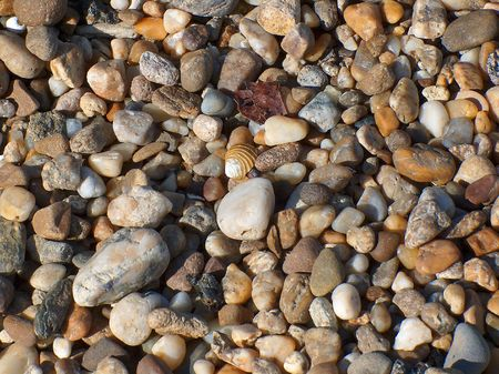Pebbles with a shell