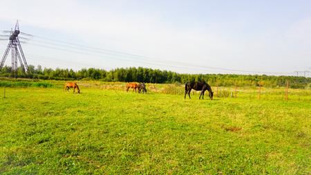 Pferd auf einem Bauernhof in Russland Landschaft Standard-Bild - 86171605