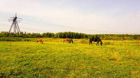 Pferd auf einem Bauernhof in Russland Landschaft Standard-Bild - 86561483
