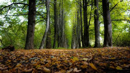 autumn colouring: Autumn foreset Stock Photo