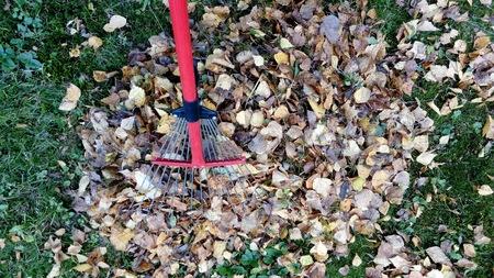 Autumn cleaning n a backyard