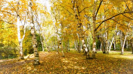 autumn in russia