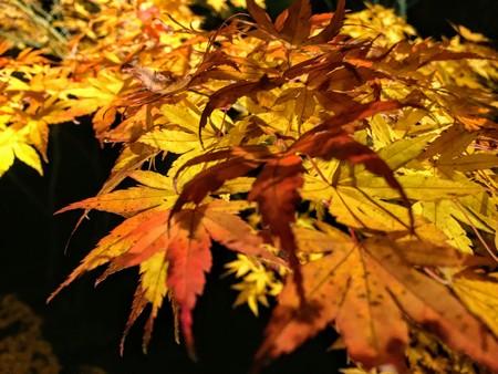 Autumn background texture