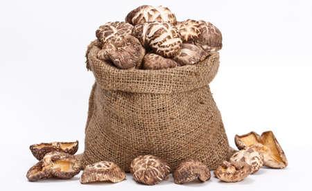 hongo: shiitake en un saco
