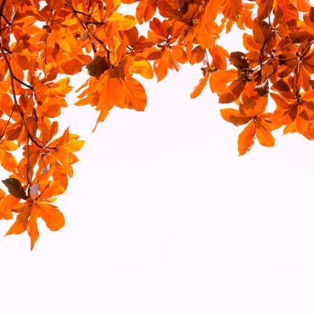 backgroud: brown leaves backgroud