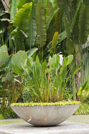 large plant basin decorated in sunny garden photo