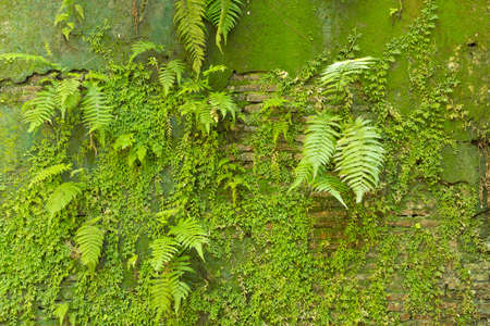 greenery fresh mossy concrete wall photo