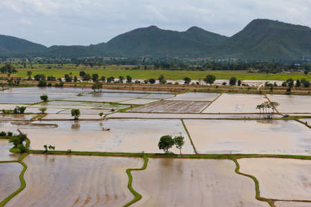rice fields in the valley preparing for planting rice photo