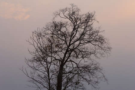 branches of dead tree in the dusk Stock Photo
