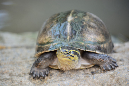 despacio: Turtle