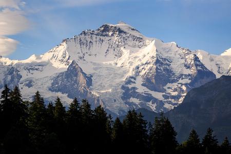 jungfraujoch: View of Jungfraujoch with tree foreground ,Switzerland Stock Photo