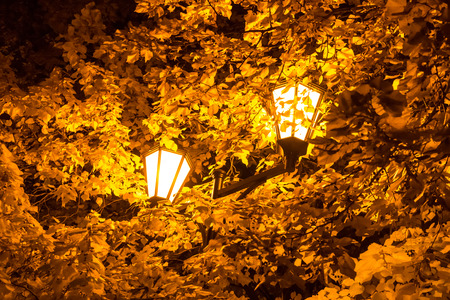 named: Autumn 2013. Russia. Moscow. Central Park of Culture and Rest named after Gorky. The street lamp in the leaves of the autumn trees.