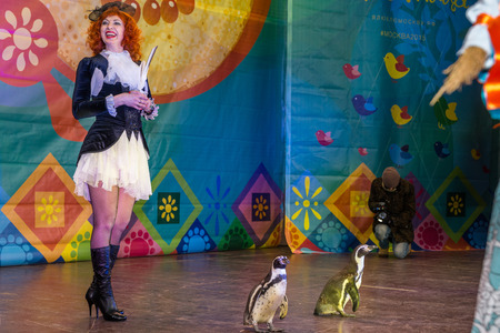 maslenitsa: Winter 2015. Day. Russia. Moscow. Maslenitsa (pancake week). The Celebration of Maslenitsa (pancake week). The concert in honor of the Holiday. The performance of the trained penguins with trainer on stage.