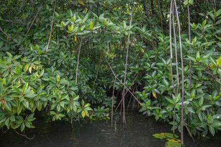 vicinity: Sri Lanka. Bentota . The vicinity Of Bentota.  The river Bentota among the Jungle.