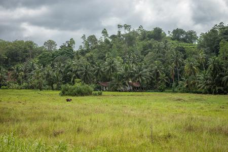 vicinity: Sri Lanka. Bentota. The small village on the edge of the Jungle in the vicinity of Bentota.