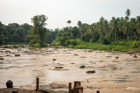 vicinity: Sri Lanka. Kandy - August 16, 2015. The Wide River among the Jungle in the vicinity of Kandy.