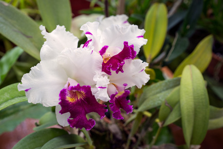 orchid house: Sri Lanka. Kandy - August 16, 2015. The Orchid House. The Orchid Flower.