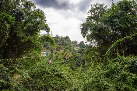 outbuilding: Sri Lanka. Kandy - August 16, 2015. The Royal Botanic Garden. The Houses among the Jungle on the River Bank.