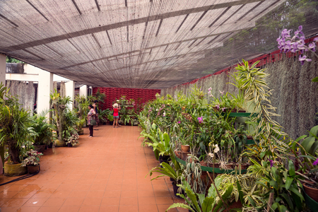 orchid house: August 16, 2015. Sri Lanka. Kandy. Inside the Orchid House. Editorial