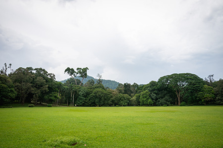 kandy: Sri Lanka. Kandy - August 16, 2015. The Royal Botanic Garden.