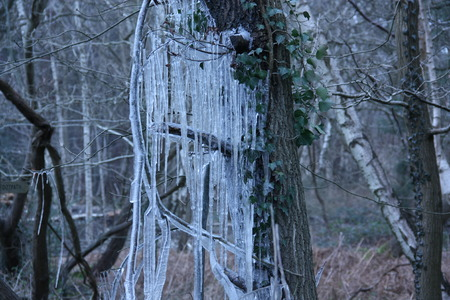 Road side trees splashed with melt water, on the road side during the day, then frozen at night to show a crystal display Imagens