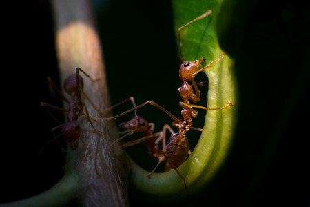Ant Stock Photo - 27581491