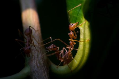 Ant Stock Photo - 27581491
