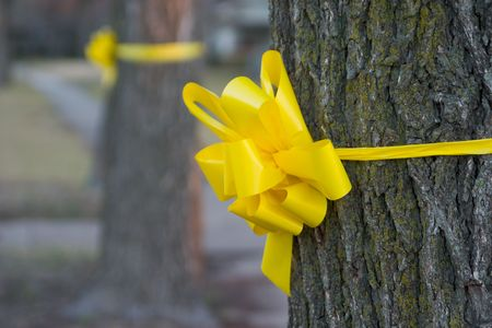 Closeup of a yellow ribbon tied around an oak tree in a residential neighborhood.