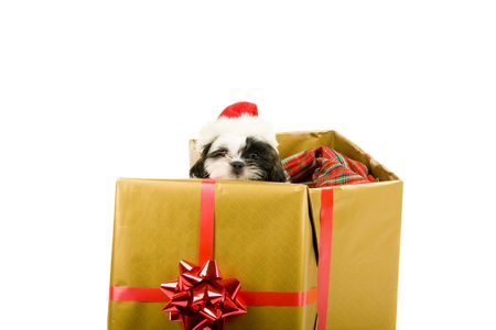 One cute little Shih Tzu puppy looks over the edge of a Christmas gift box with a red bow and ribbon. photo