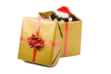 One cute little Shih Tzu puppy looks over the edge of a Christmas gift box with a red bow and ribbon. Stock Photo - 3464532