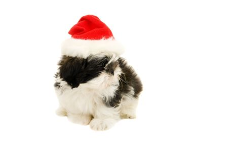 Cute Shih Tzu puppy all alone in a Santa hat. Stock Photo - 3520323