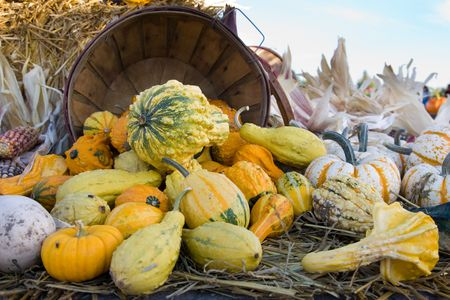 falling out: Squashes and pumpkins falling out of a basket Stock Photo