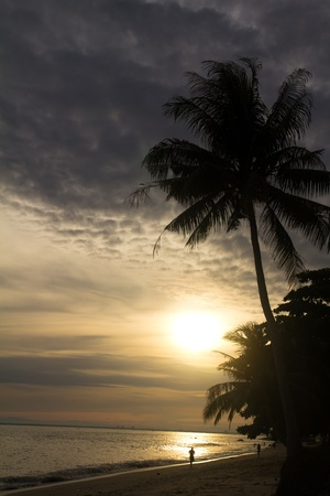 sihouette: Sihouette of coconut palm tree at sunrise