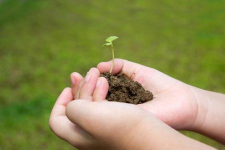 Hand met jonge plant tegen het groene veld