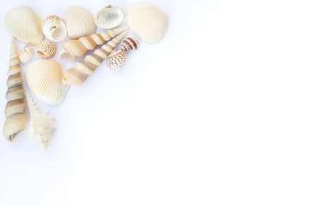 Different seashells isolated over white background photo