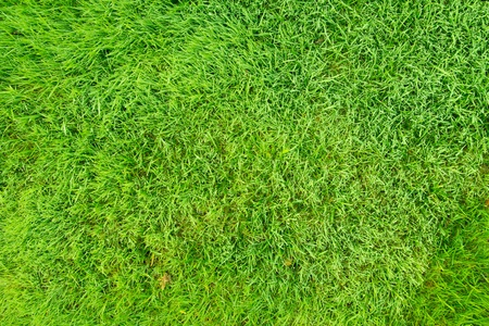 Image of natural green grass field, can be used as background photo