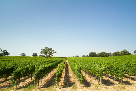 Hermosos viñedos y bodega en Sonoma County, California Foto de archivo