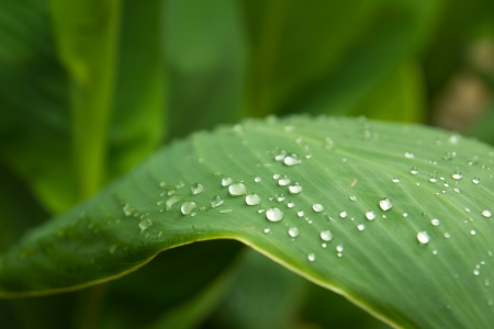 vapore acqueo: Close up di foglie verdi con gocce d'acqua