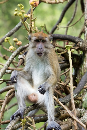 munching: Portrait of monkey munching peanut on tree