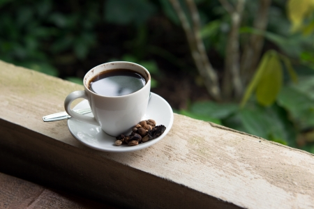 Cup of Kopi Luwak, world's most expensive coffee from Bali Indonesia Stock Photo - 20153998