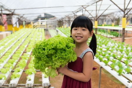 Little child is holding vegetable in hydroponic farm photo