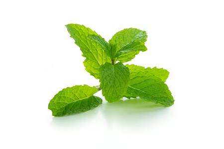 Fresh mint leaves isolated on white background Фото со стока