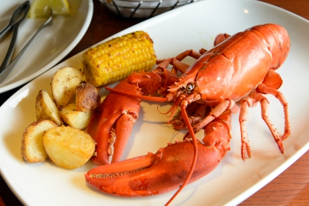 lobster tail: Roasted live maine red lobster served on plate