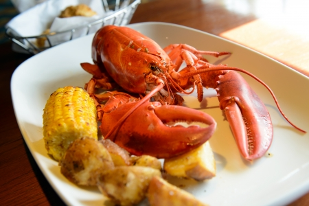 Roasted live maine red lobster served on plate photo