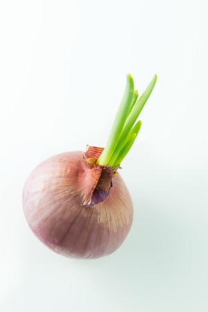Close up of onion sprouting on white background