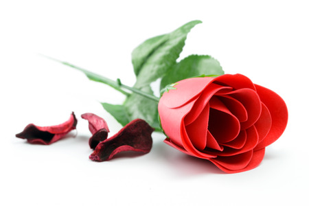 Red rose flower with dry petals isolated on white background photo