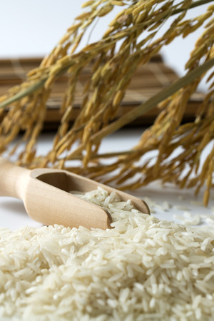 Rice grain with wooden scoop and paddy photo